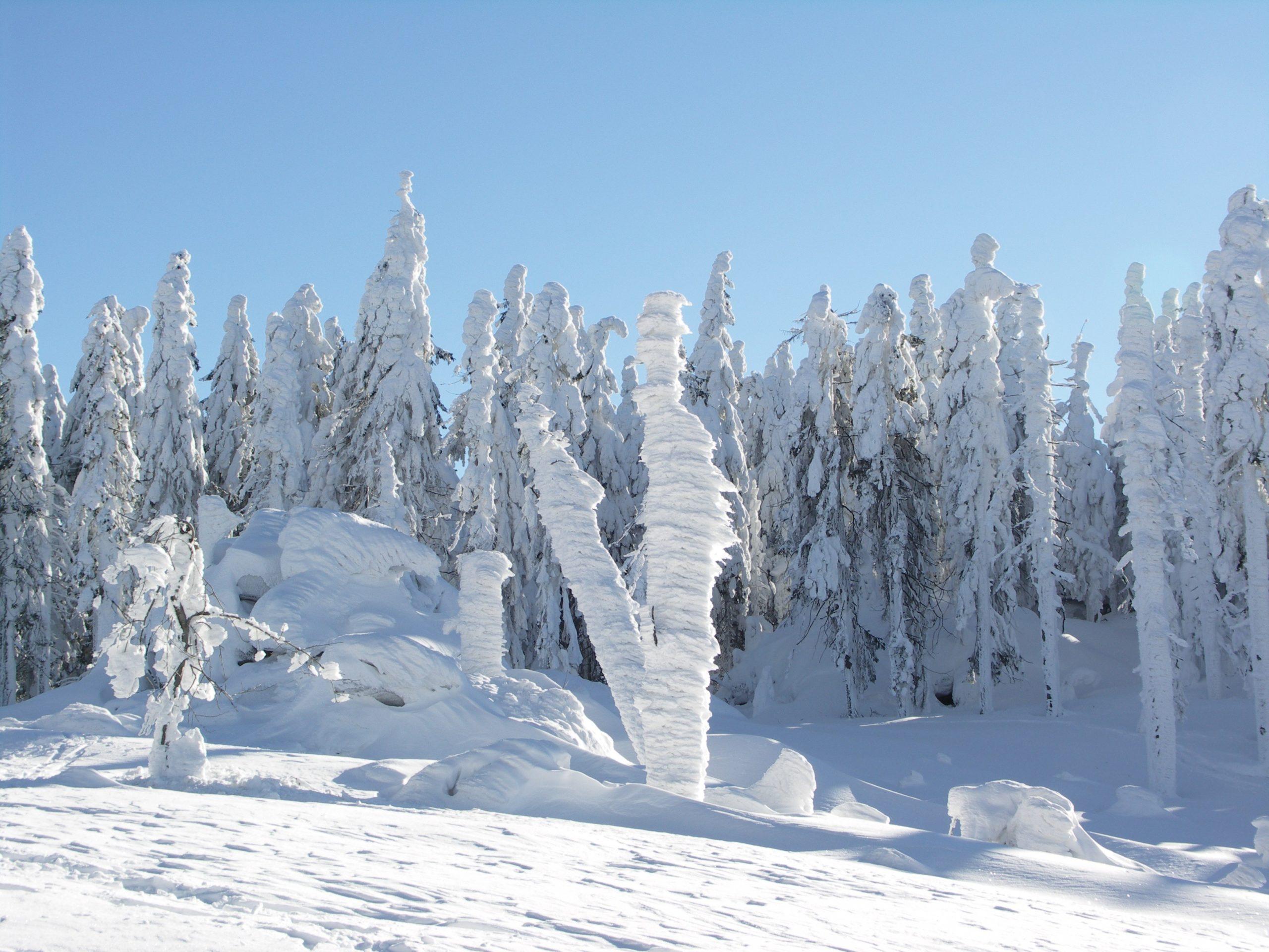 Winterlandschaft-Haidmühle